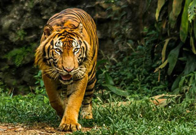 Kebun Binatang di Selatan Jakarta